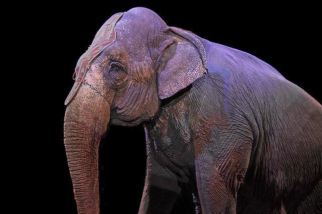 Spectacle avec éléphant